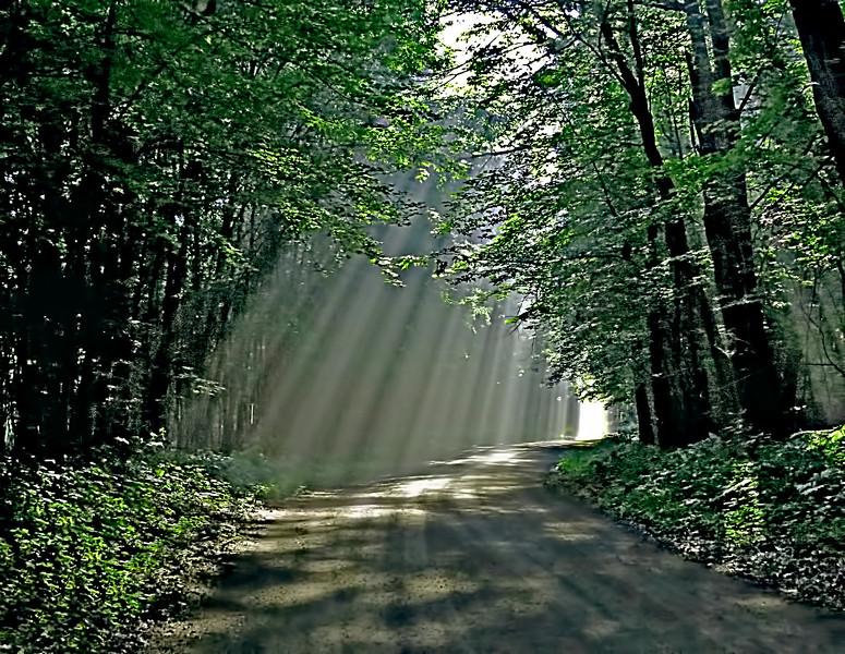 Magical Sunbeams
