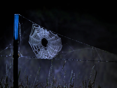 FOGGY WEB ON A BLUE BEDSTEAD