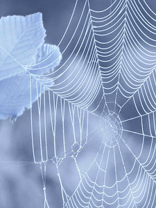 WEB IN BLUE