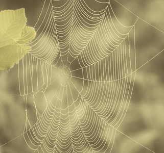 YELLOW WEB
