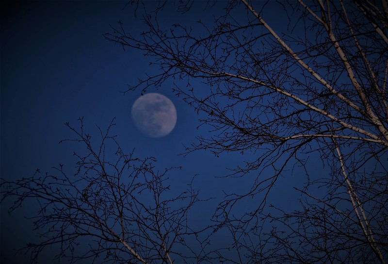 Moon Branches