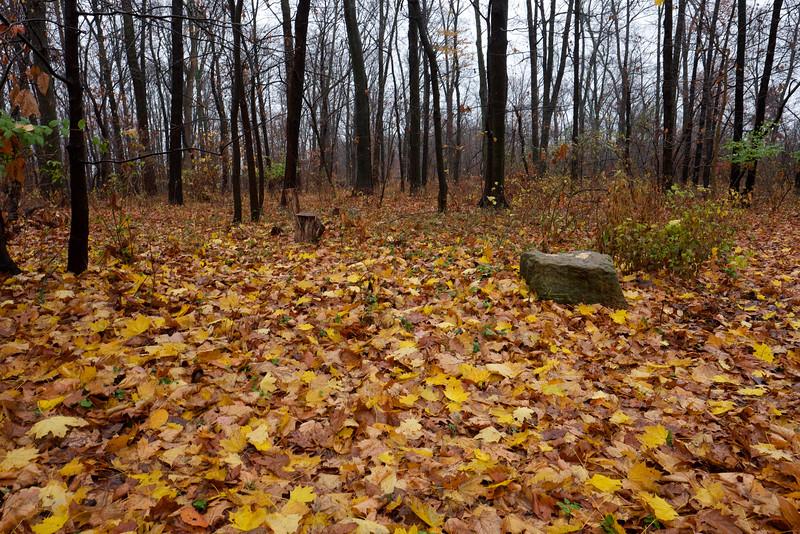 Leaf path (F8)