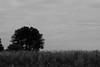 Grey Clouds (55mm)
