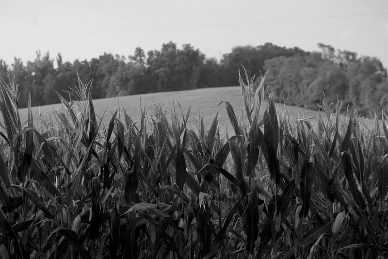 Fields (55mm)