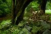 Mossy Green (Fuji XE1, 18-55)
