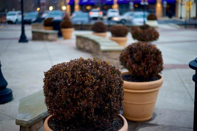 Hardy Plants, Jan 2014