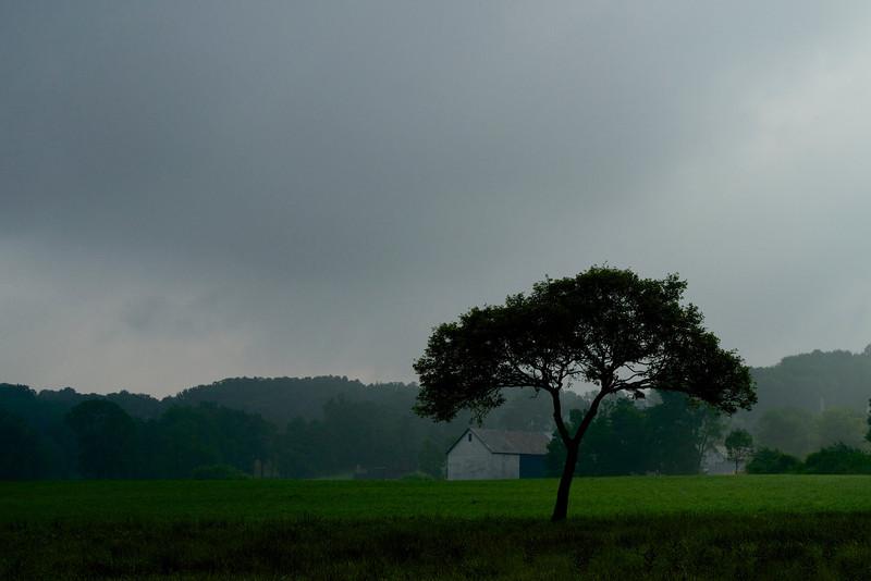 Lone Tree (XE1, 60mm)