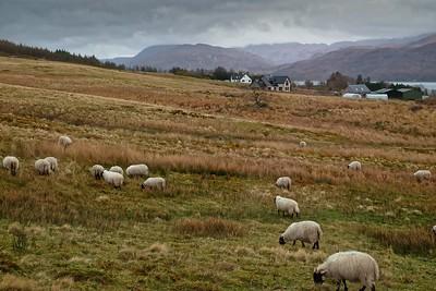 near Lochcarron ...