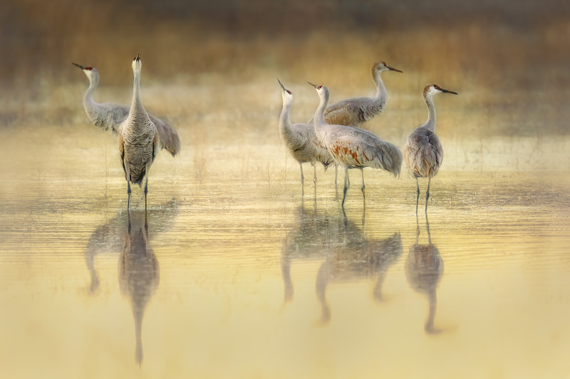 The Crane Pool ~ Honorable Mention 2019 Maine Photography Shoe and Professional Photography Association Loan Collection 2019
