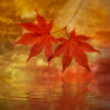 Autumn's Joy ~ 2nd place winner 2016 Maine Photography Show~ Photo Impressionism