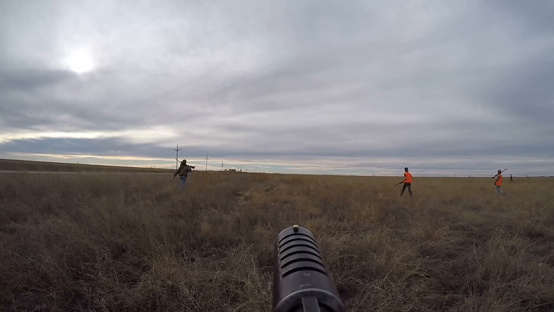 field walking on gun