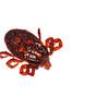 Cattle tick (Acarina Ixodidae)