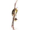 Argiope spider (Argiope sp, Araneidae)