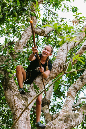 Taylor Crowe knocking mangos out of the trees at the Chituka Farm.