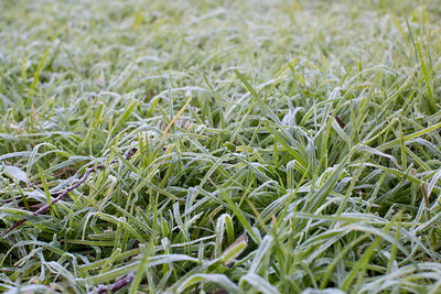 Day 215: Frost on our backlawn!