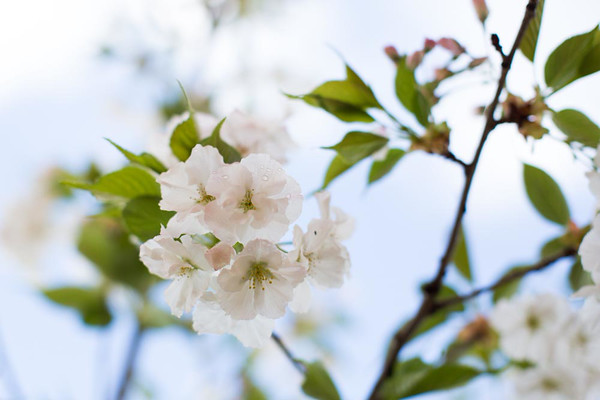Day 279: Blossoms in bloom