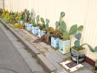 Day 275: Road side plantings