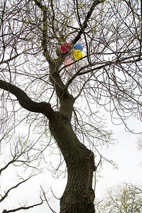 Day 187: Photoshoot balloons stuck in a tree