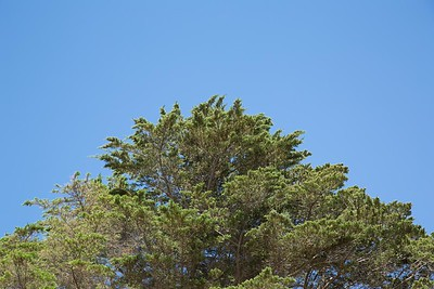 Day 348: Tree top