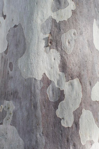 Day 190: Bark markings