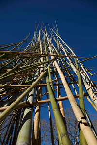Day 254: Bamboo sculpture (Brisbane Festival)