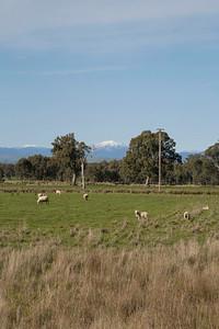 Day 202: Looks like a scene from NZ (Glen Creek, near Mansfield)