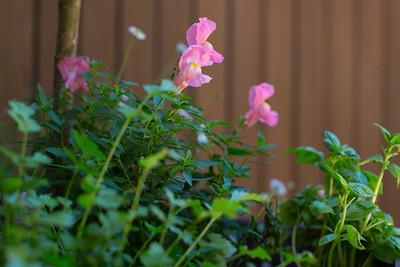 Day 289: Herb garden