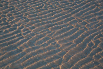 Day 269: Sand ripples