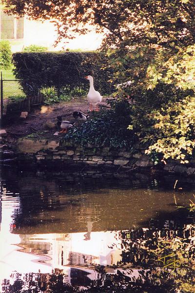 Avranches 2002 - La Mare aux Mares