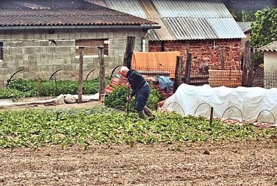 Le Val-Saint-Père 2004 - René Tending his Garden