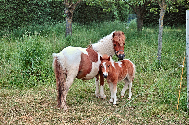 """<html>Le Val-Saint-Père 2006 - Poneys <a title=""""godaddy counter"""" href=""""http://statcounter.com/godaddy_website_tonight/"""" target=""""_blank""""><img style=""""display:none;"""" src=""""http://c.statcounter.com/2514080/0/73d54fdc/0/"""" alt=""""godaddy counter""""></a></html>"""