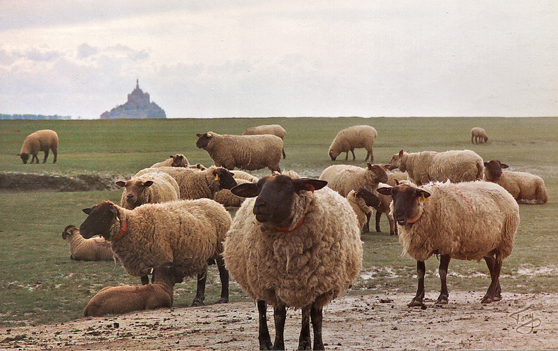 """<html>Le Val-Saint-Père 2002 - Sheep in Abundance <a title=""""godaddy counter"""" href=""""http://statcounter.com/godaddy_website_tonight/"""" target=""""_blank""""><img style=""""display:none;"""" src=""""http://c.statcounter.com/2514080/0/73d54fdc/0/"""" alt=""""godaddy counter""""></a></html>"""
