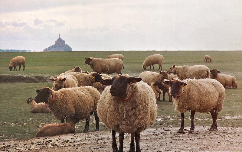 Le Val-Saint-Père 2002 - Sheep in Abundance