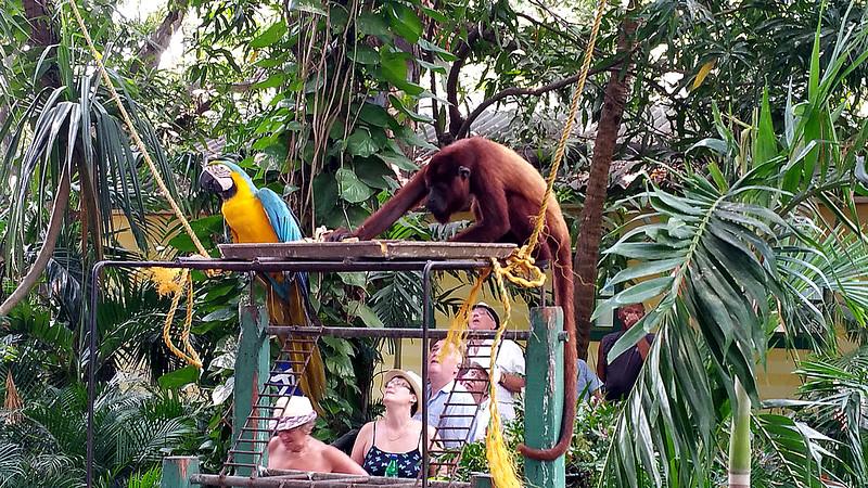 someone stealing a banana