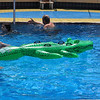 here's a 'real Croc' in the Seaview pool