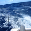 it got a bit 'bumpy' after we cleared the west point of HMC  with 6' seas bouncing us around