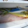 Mahi Mahi's caught on Fishing Charter with Capt Jolly