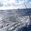 IMG_8713-1HalfMoonCaySportfishing032412_1024x768