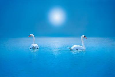 Love at the Swan Lake
