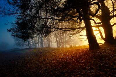 Dawn Dreams
