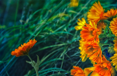 Orange Desire