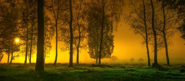 Morning's Golden Glow