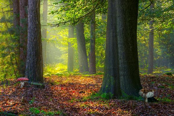Woods Mystique