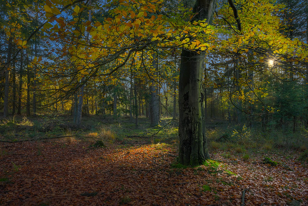 Light of Fall