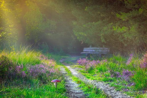 Path of the Wonderer