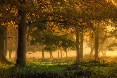 Fairytale Autumn