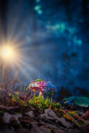 In Autumn's Light