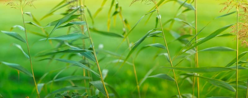 Glory of Grass