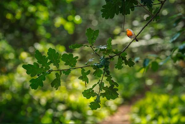 Robin's Path I
