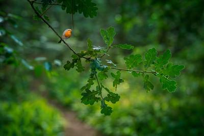 Robin's Path II